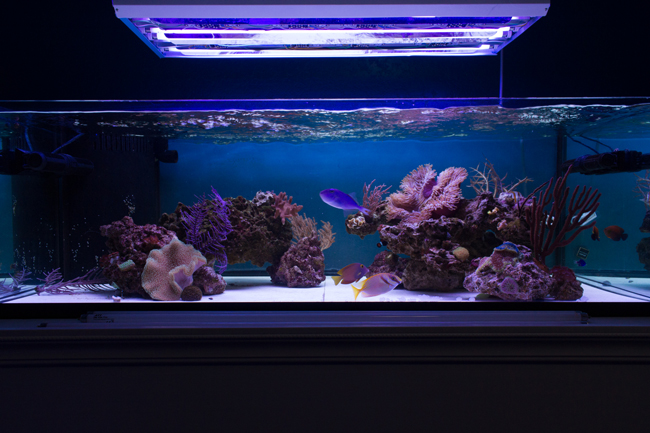 1 x Giesemann Aquablue Coral, 1 x ATI Coral Plus, 1 x ATI Purple Plus, 1 x Giesemann Super Purple