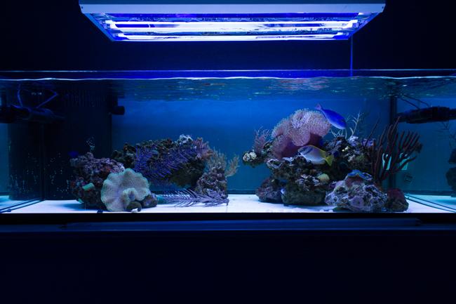 2 x Giesemann Actinic Blue & 2 x Aquablue Coral