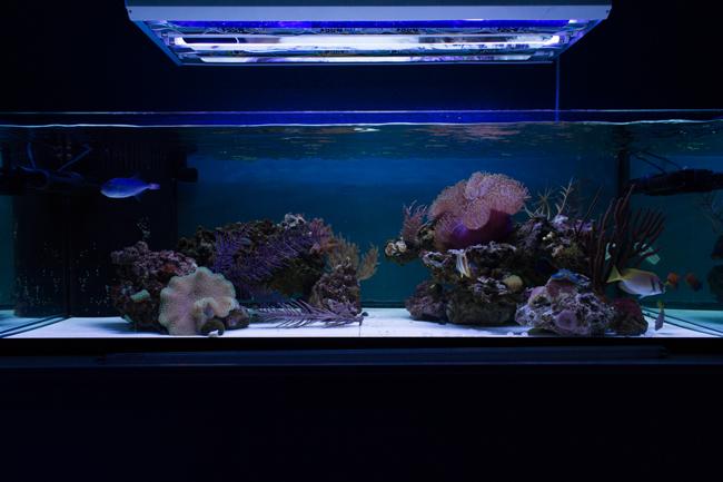 2 x Giesemann AquaBlue Coral