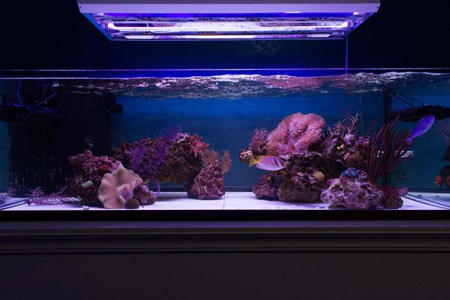 2 x ATI Purple Plus