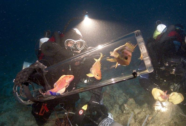 Bart Shepard, the director of the California Academy of Sciences' Steinhart Aquarium collecting fish using a specialized decompression chamber (Elliot Jessup/Cal Academy)