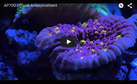 Kessil-Video
