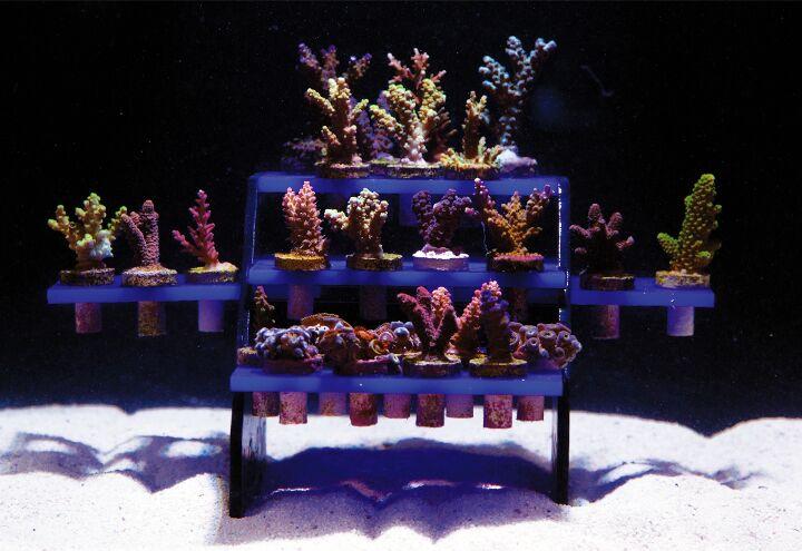 Reef Rack 50