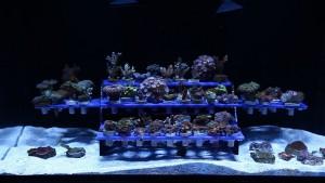 Reef Rack 102