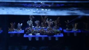 Reef Rack 32
