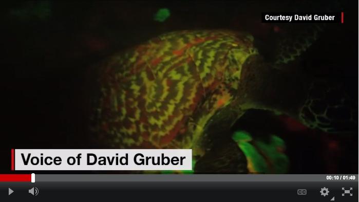 David-Gruber