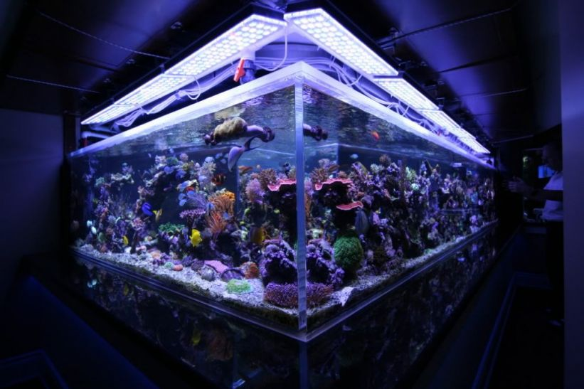 Orphek LED lighting over 1350 gallon aquarium