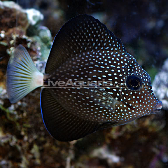 Top ten ish of the most expensive tropical fish aquanerd for Saltwater fish for sale near me