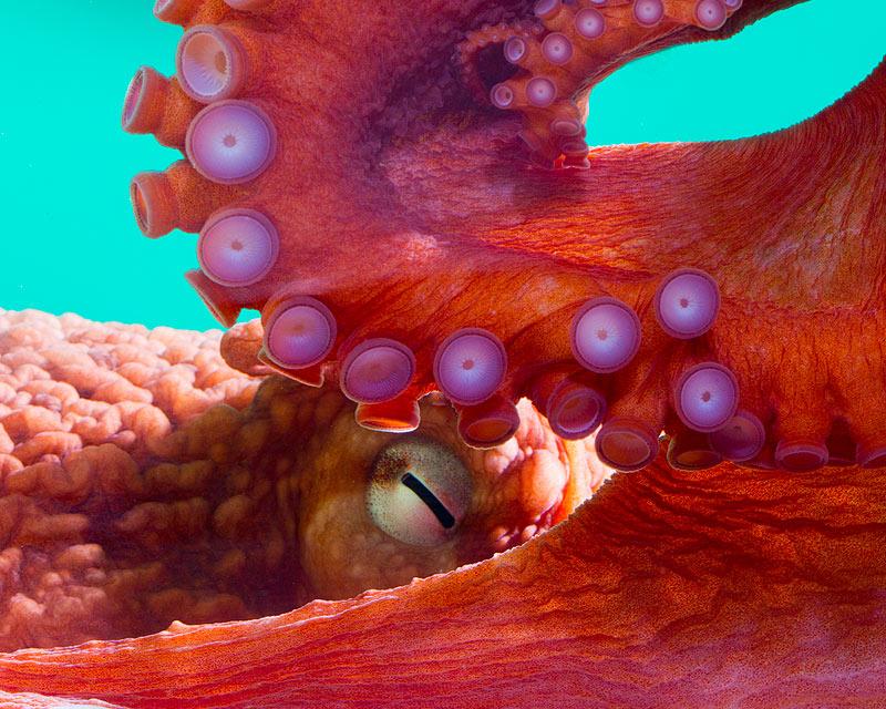 octopusjpg-1