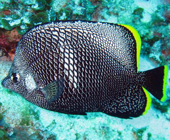 Top Ten Ish Of The Most Expensive Tropical Fish Aquanerd