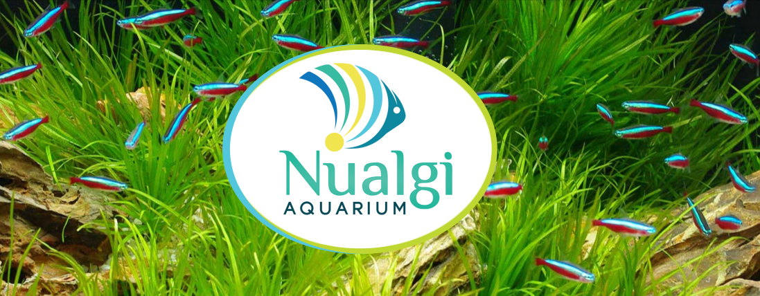 Nualgai-Banner