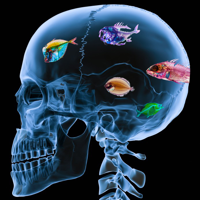 Fish-On-The-Brain