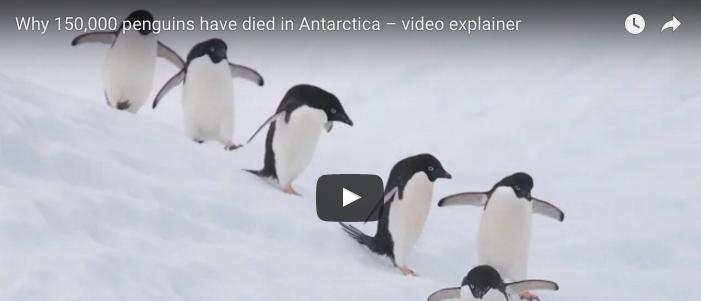 150,000 penguins die after giant iceberg renders colony landlocked