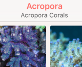 Coral Atoll introduces its new app for Reef Aquarium & Diving Enthusiasts