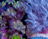 Featured Coral of the Week 2/16/2016 – 4 Piece Assorted Frag Pack