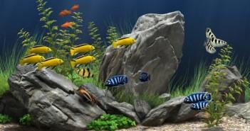 inverter-fish