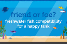Freshwater-friend-foe