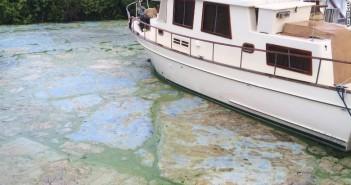 160701120243-01-florida-algae-0630-exlarge-169
