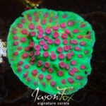 Photo Credit: Jason Fox Signature Corals - TCR Alien Pox