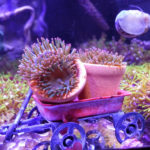 Majano Flowerpots
