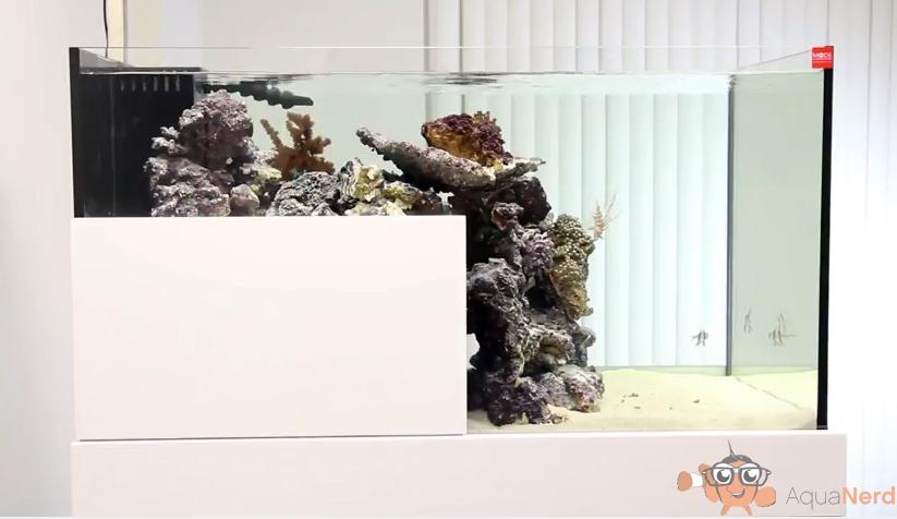 mode-aquarium-drop-off