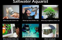 saltwater-aquarist