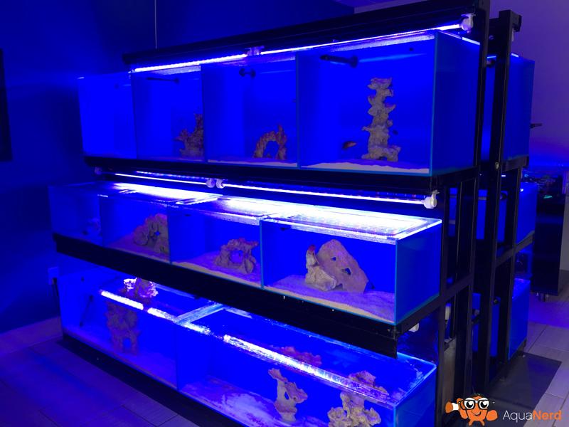 Fish-Display