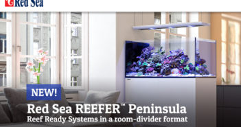 Red-Sea-Reefer