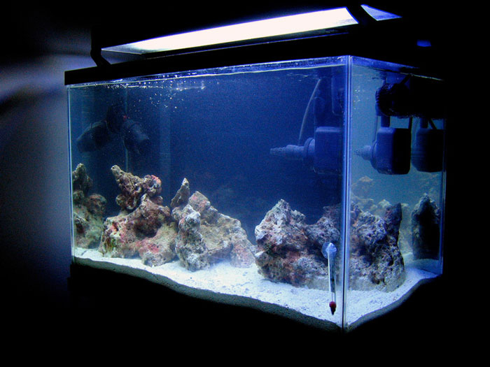 Beginners guide to cycling an aquarium aquanerd for Cycling a fish tank