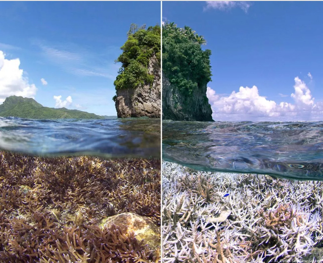 Coral death and bleaching in American Samoa -The Ocean Agency