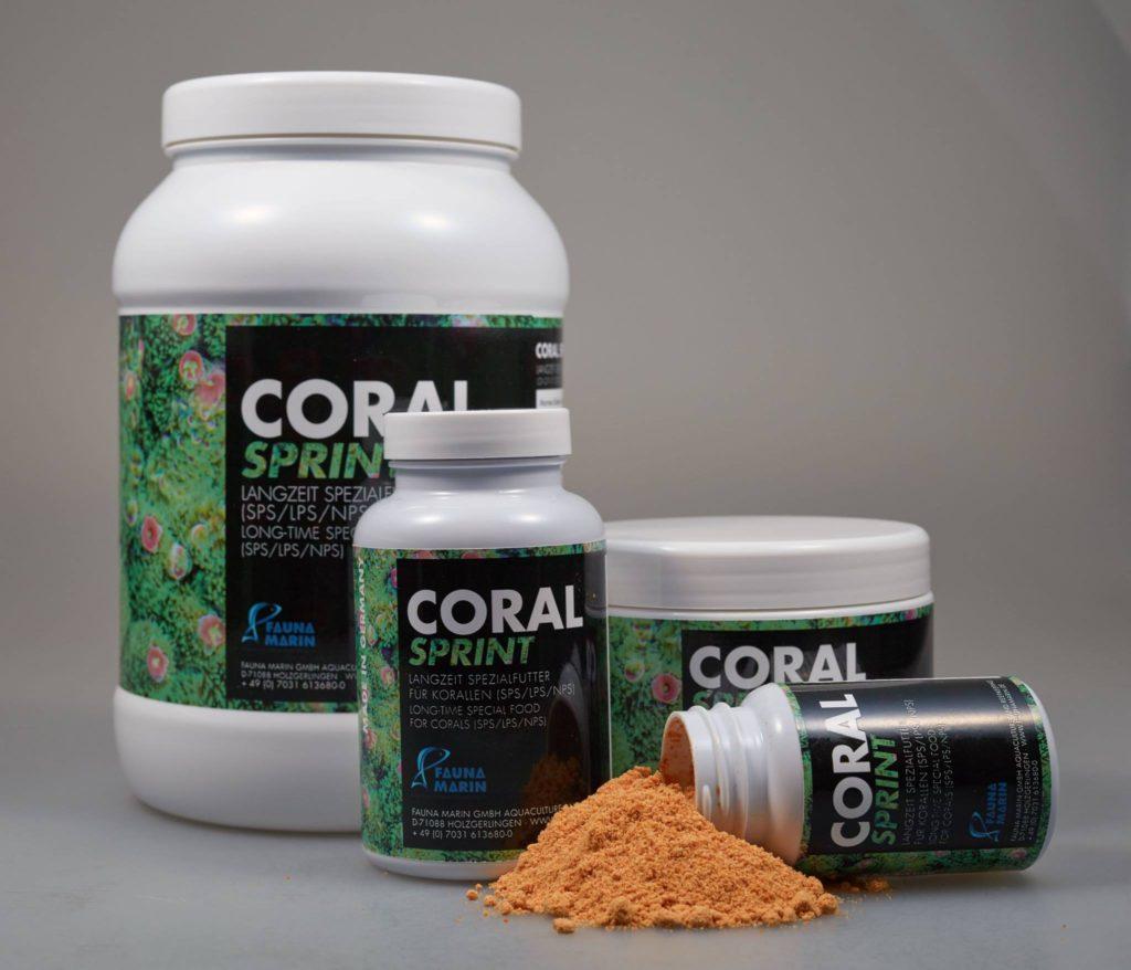 coral-sprint-fauna-marin