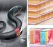 eel battery