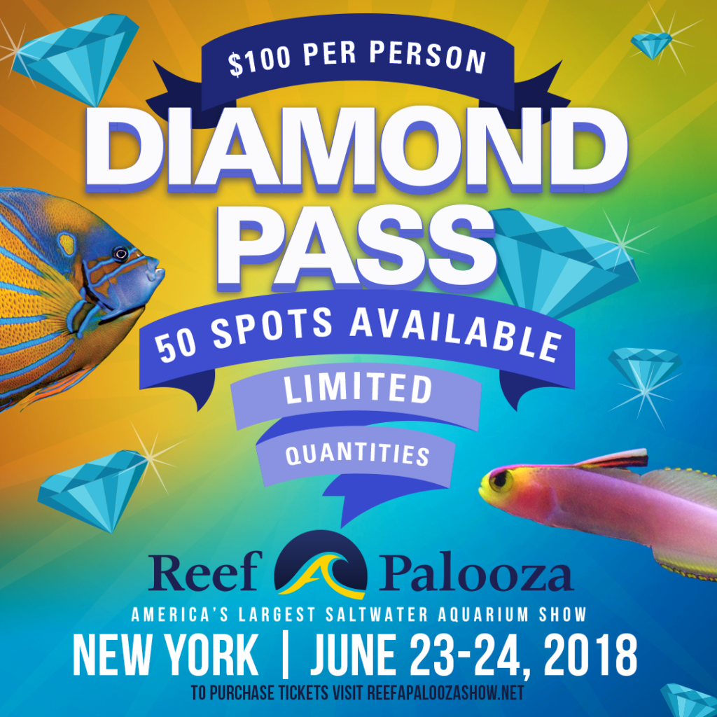 Reefapalooza_Diamond Pass