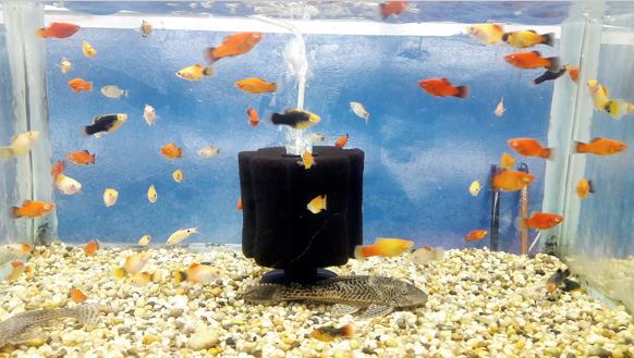 (Source: https://commons.wikimedia.org/wiki/File:Freshwater_Aquarium_Fish_3.jpg)