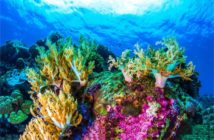 coral_reef_threats_large